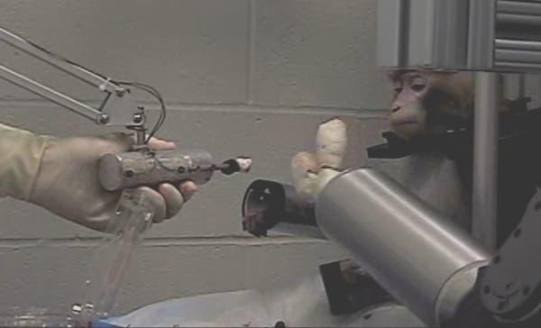 Affe mit gedankengesteuerter Armprothese
