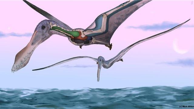 Flugsaurier Anhanguera santanae