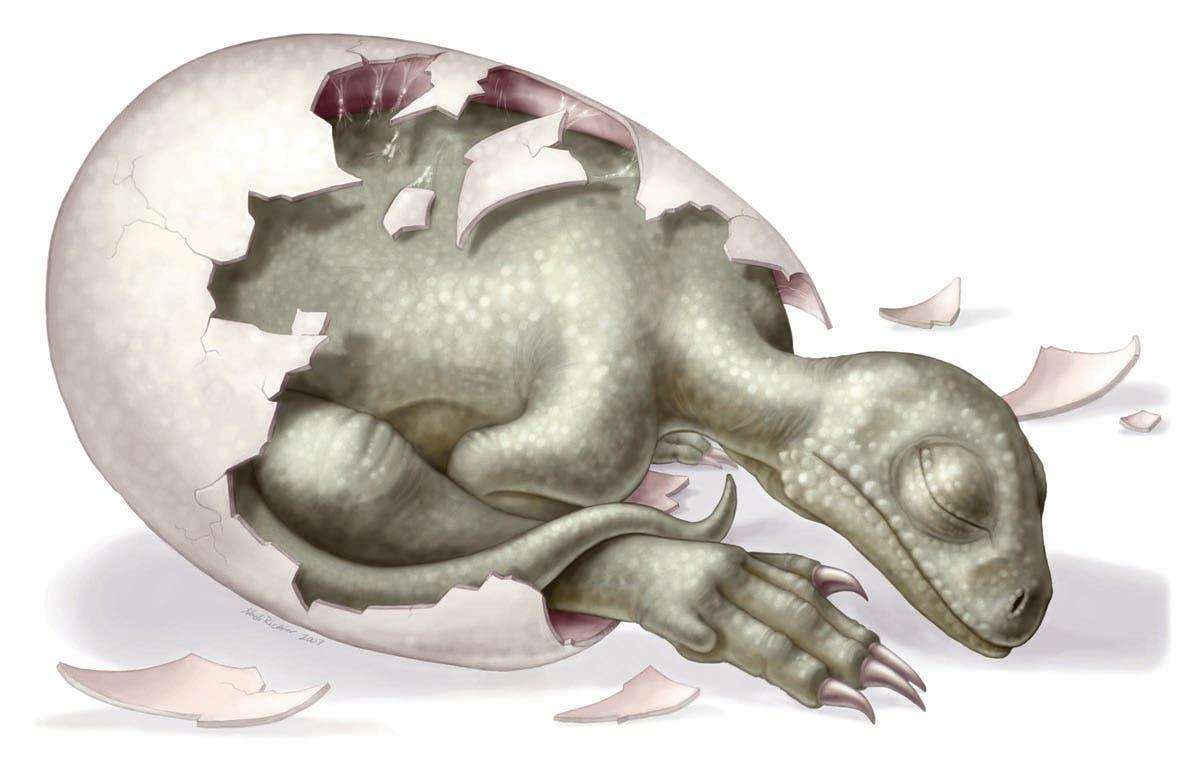 Embryo eines Massospondylus