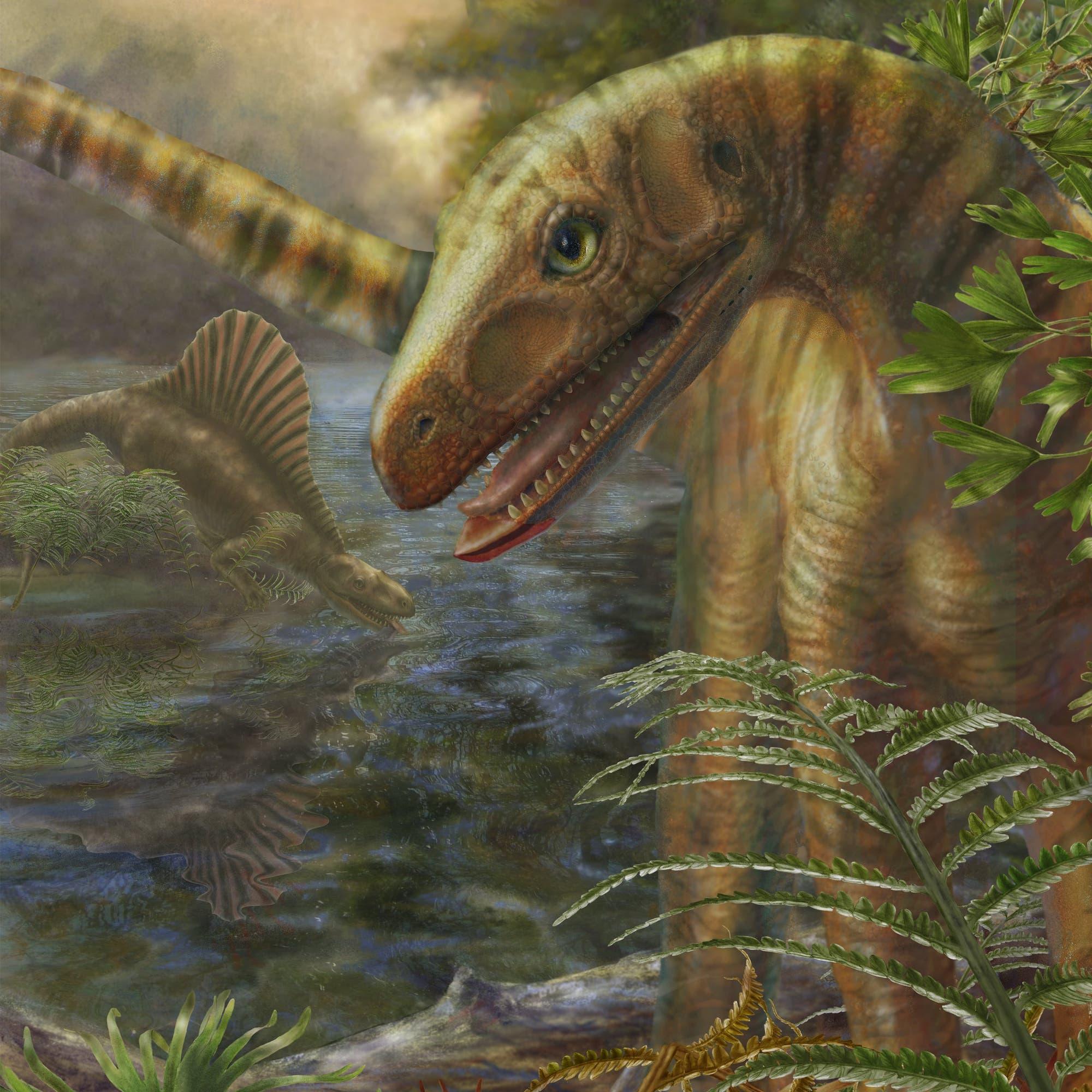 <i>Asilisaurus kongwe</i>