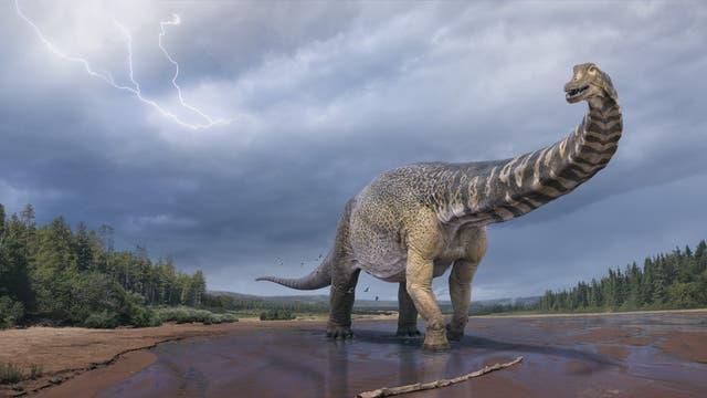 Illustration des neu bestimmten Dinosauriers Australotitan cooperensis.