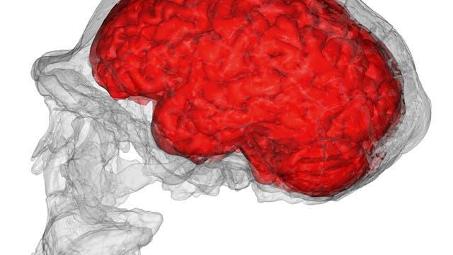 virtuelles Gehirn