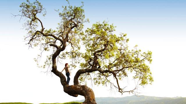 Frau steht auf dem Stamm in einem gewaltigen Baum und genießt die Aussicht