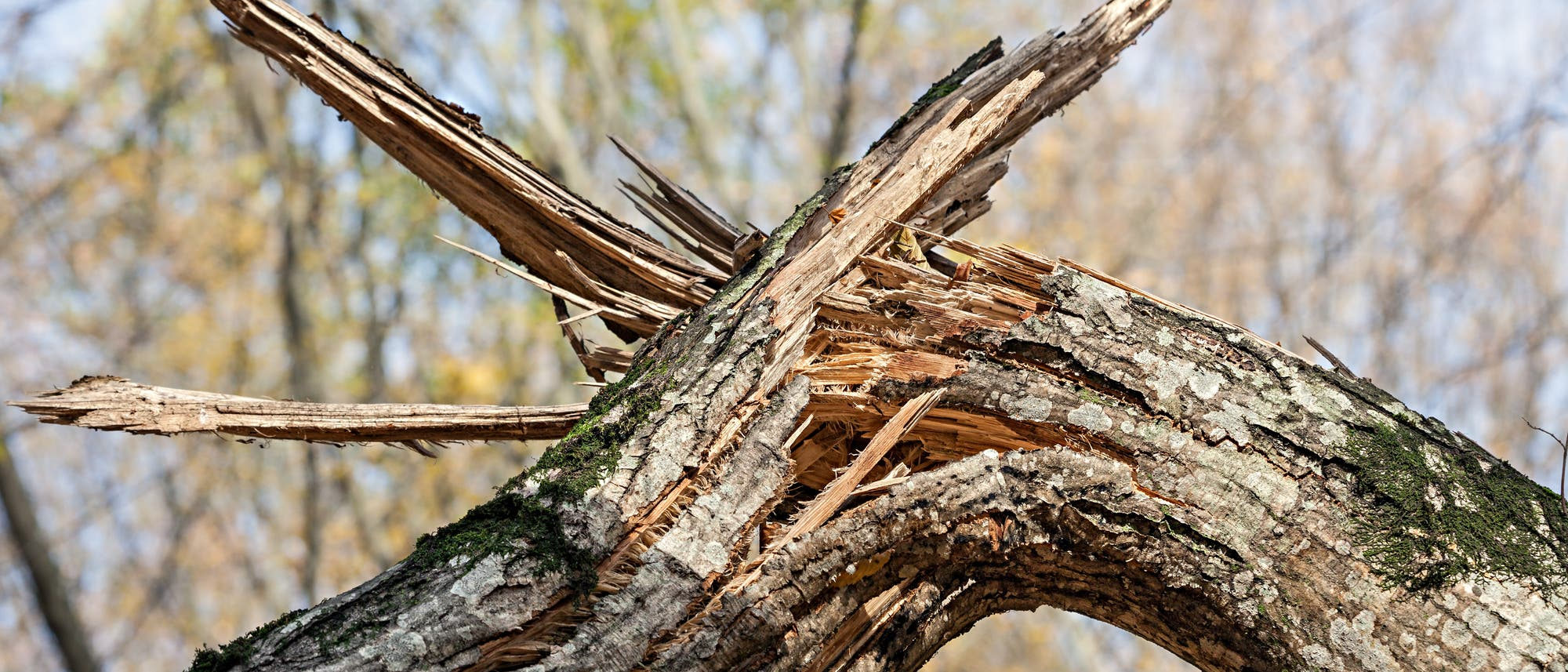 Gebrochener Baum