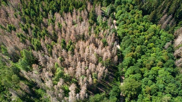 Baumsterben in mitteleuropäischen Wäldern