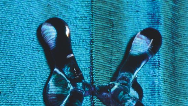 Wassertropfen trifft auf Flügel eines Morphofalters