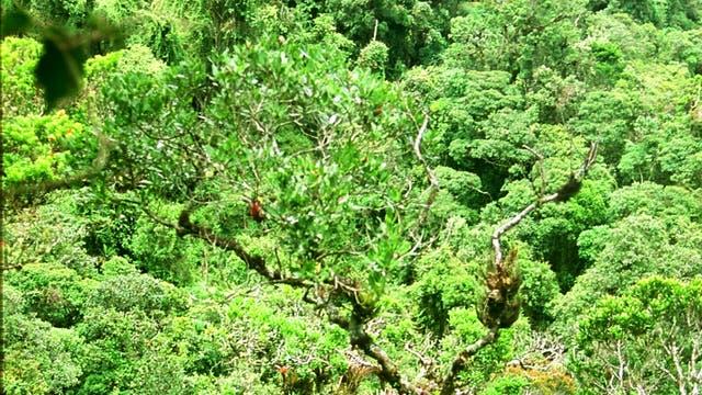 Unberührter Bergregenwald in Ecuador