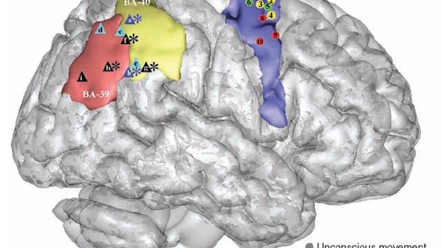Bewegungssteuerung und -wahrnehmung im Hirn