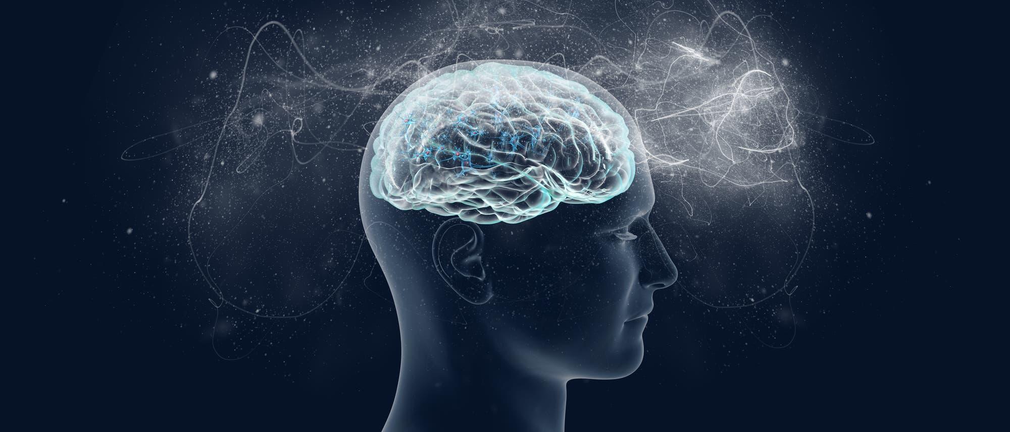 Das Gehirn - Sitz des Bewusstseins