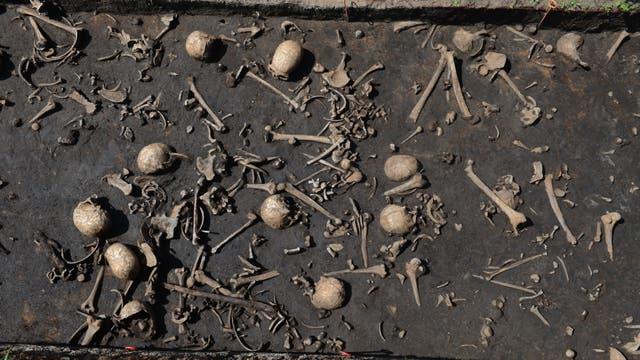 Schädel und Skelettteile vom Tollense-Schlachtfeld