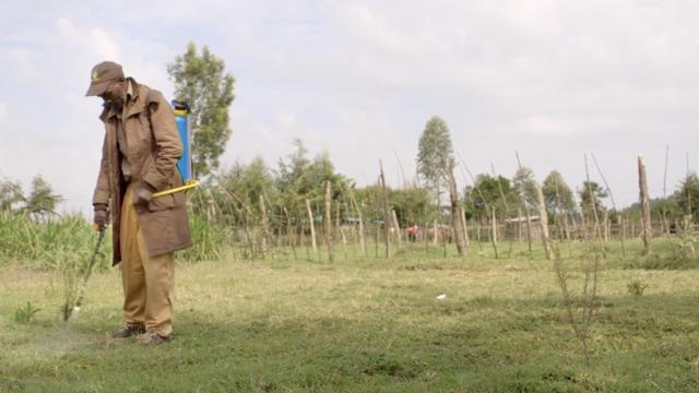 Dokumentation über Pestizide bei afrikanischen Kleinbauern