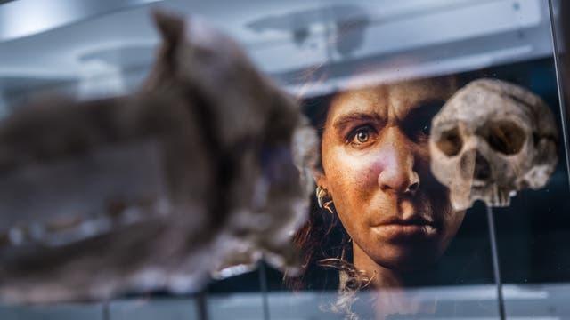 Homo heidelbergensis, Museum Paläon