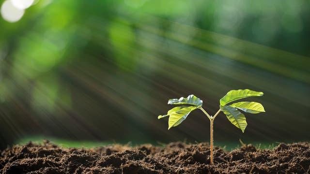 Fruchtbarer Boden mit Schössling