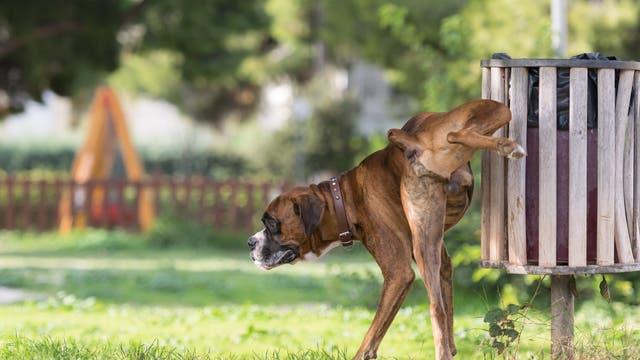 Hund markiert Revier