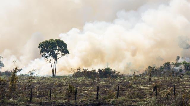 Brandrodung im Amazonasregenwald