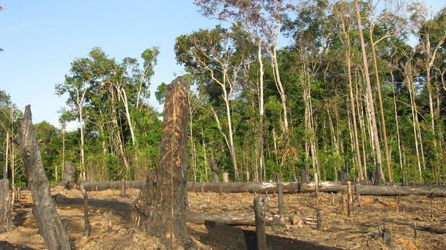 Brandrodung in Amazonien
