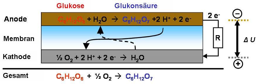 Die Brennstoffzellenreaktion