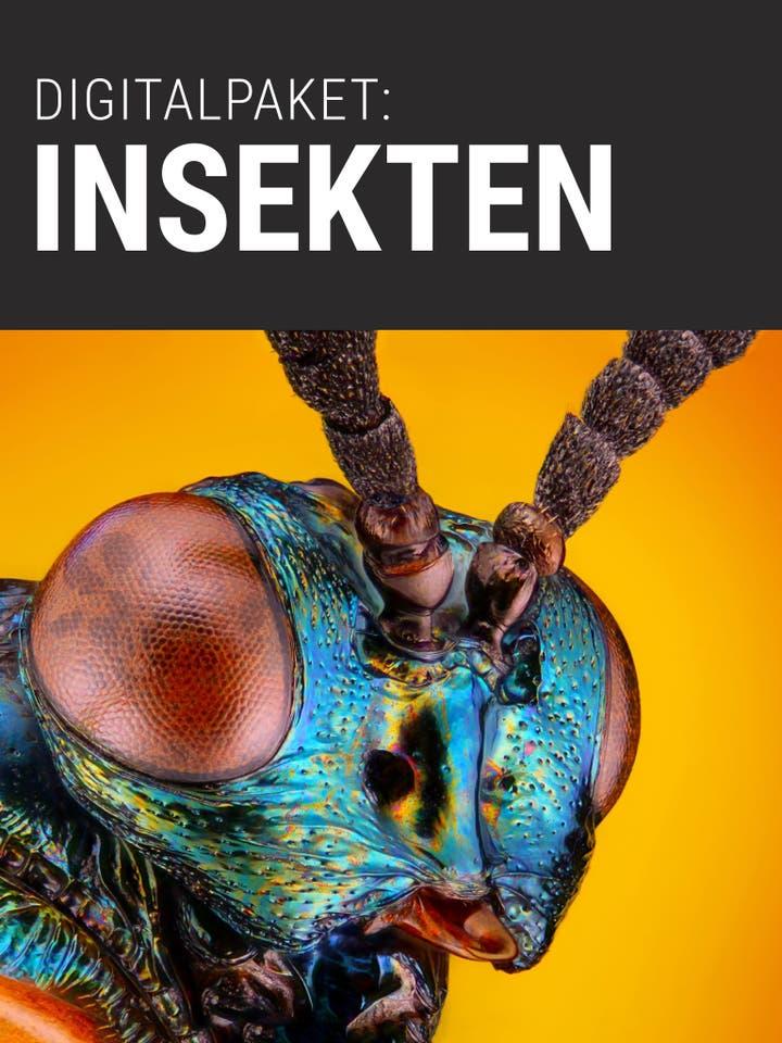 Spektrum.de Digitalpaket: Insekten