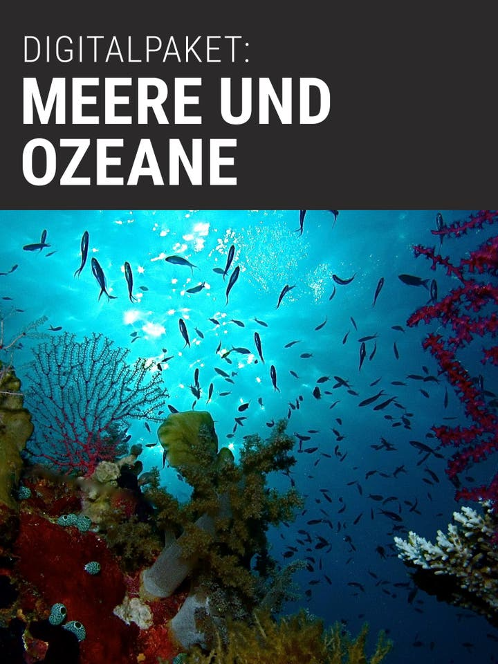 Digitalpaket: Meere und Ozeane_Teaserbild