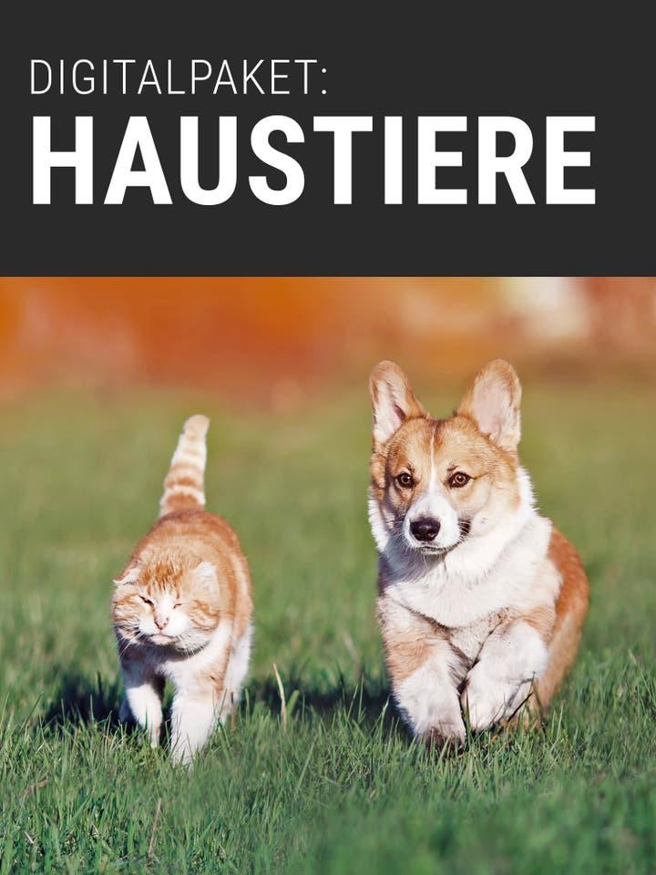Digitalpaket: Haustiere_Teaser