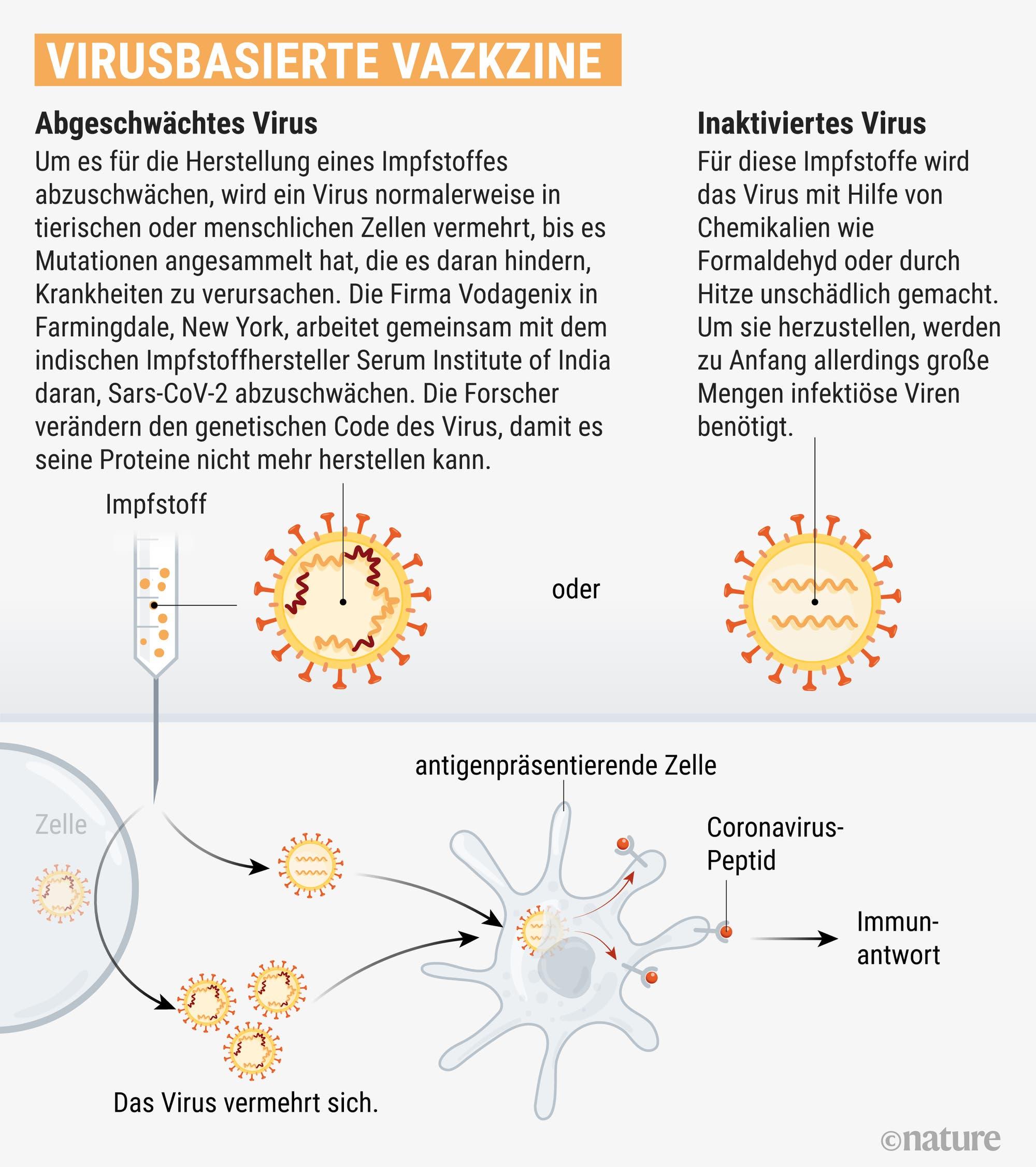 Aus inaktivierten oder abgeschwächten Viren kann man Impfstoffe herstellen