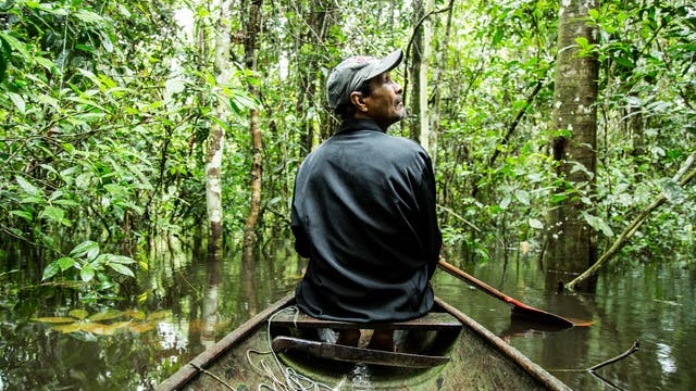 Im Boot durch den überfluteten Wald
