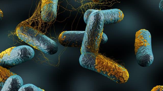Clostridien entwickeln sich bisweilen zum gefährlichen Problemkeim mit schweren Durchfällen.
