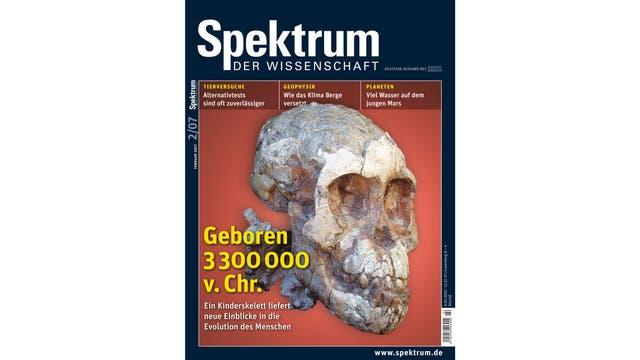 Schädel eines Australopithecus-Mädchens