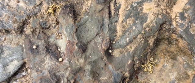 Beschädigter Fußabdruck eines Dinosauriers