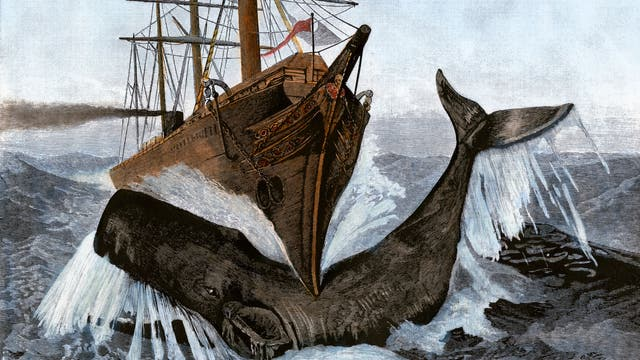 Wal vs. Schiff. Kolorierter Holzschnitt um 1850.