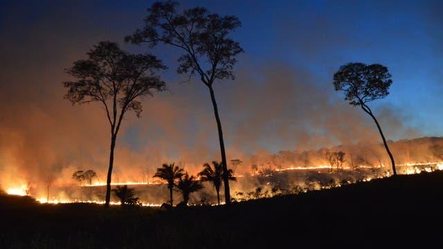 Auch in Bolivien brennen die Wälder: Unterholzfeuer in einem Trockenwald.