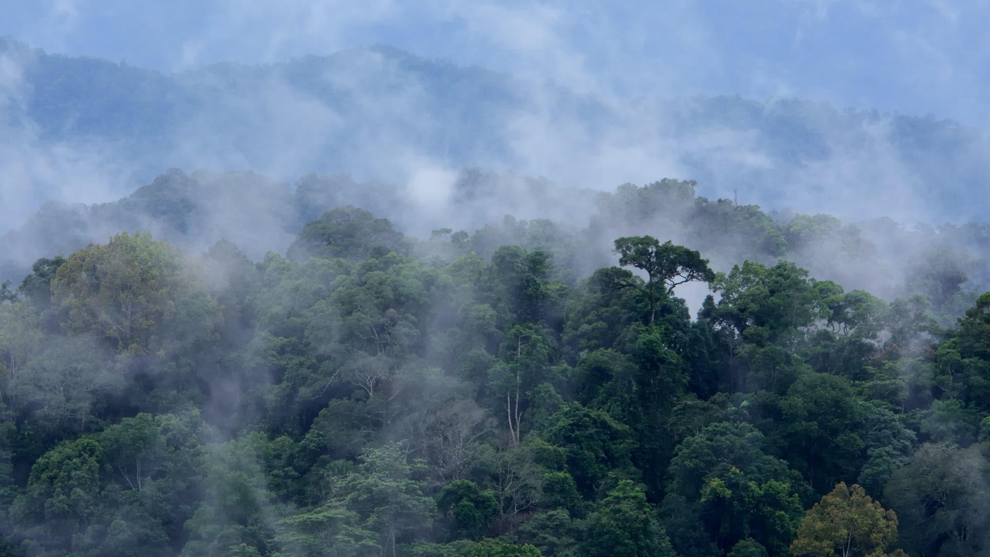 Dampfender Regenwald