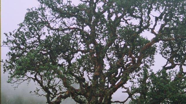 Wald in den Anden