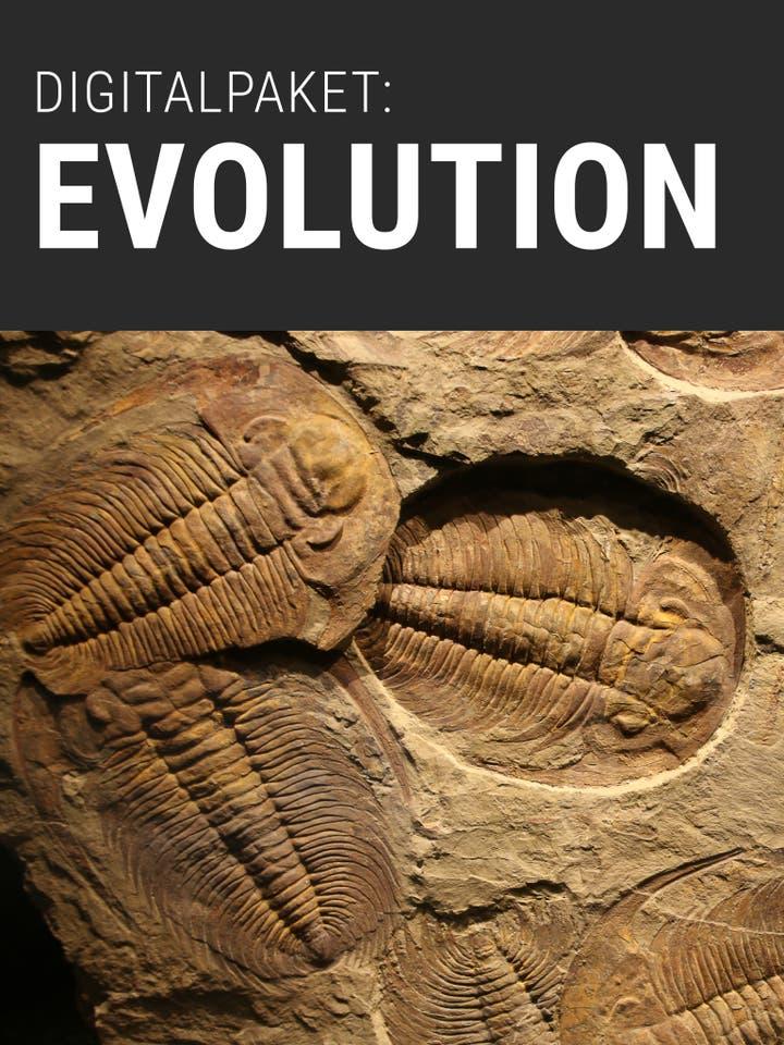 Digitalpaket:Evolution und Erdgeschichte_Teaserbild