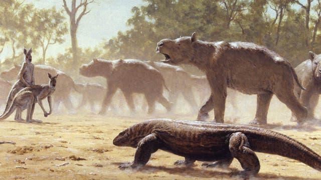 Diprotodons waren nashorngroße Verwandte der Wombats