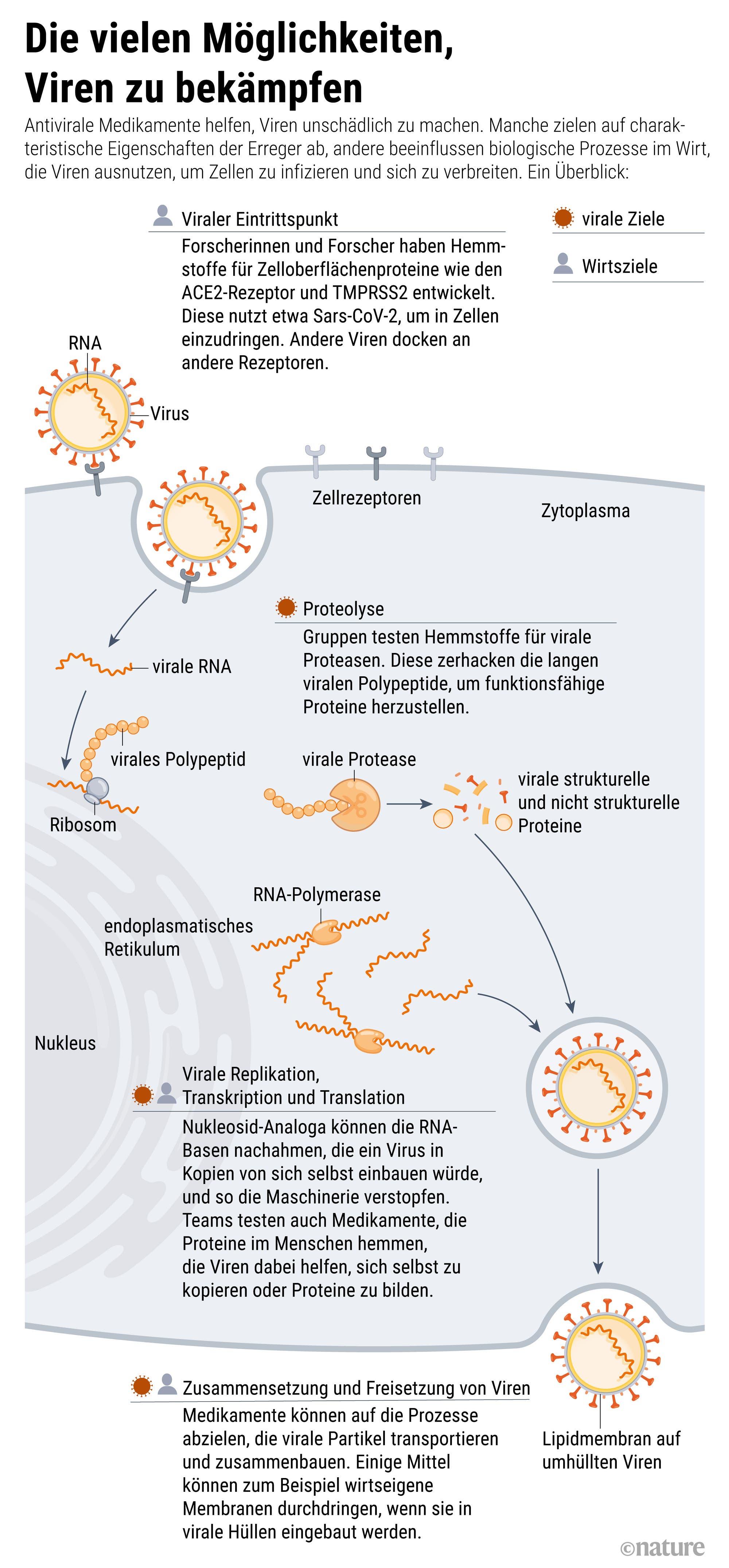 Wie antivirale Medikamente verhindern sollen, dass Viren in Körperzellen eindringen oder sich dort vermehren, zeigt diese Grafik.