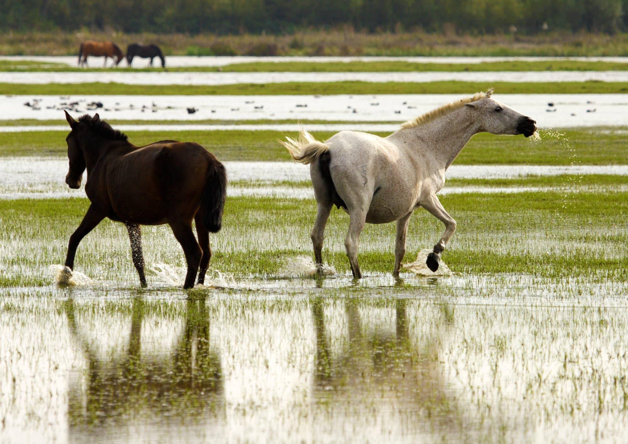 Pferde im Nationalpark Coto de Doñana