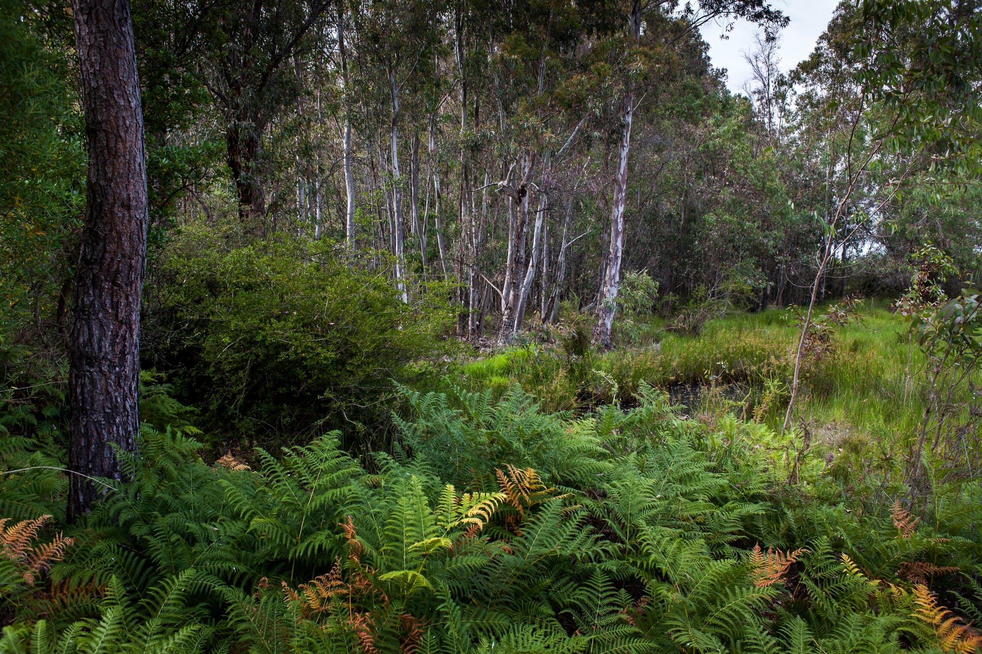Feuchtwald in der Doñana