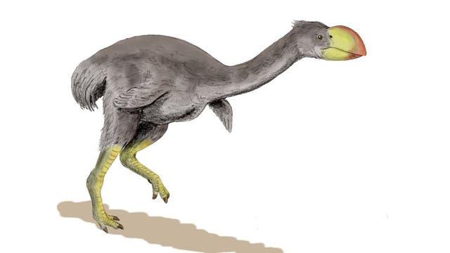 Dromornis - ein Riesenvogel aus Australien