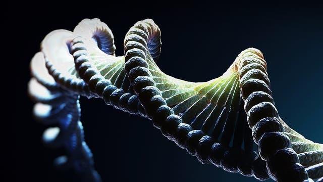 Dunkle Materie im Genom?