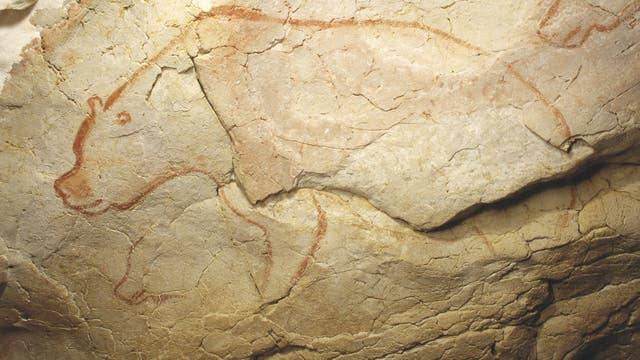Zeichnung Höhlenbär