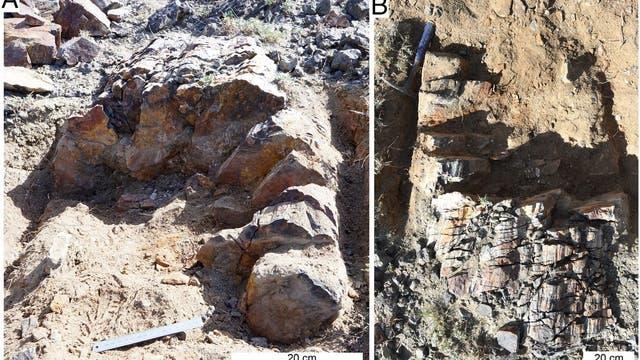 Im Nordwesten Chinas fanden Forscher gut erhaltene fossile Urbaumstümpfe (X. lignescens gen. et sp. nov.)