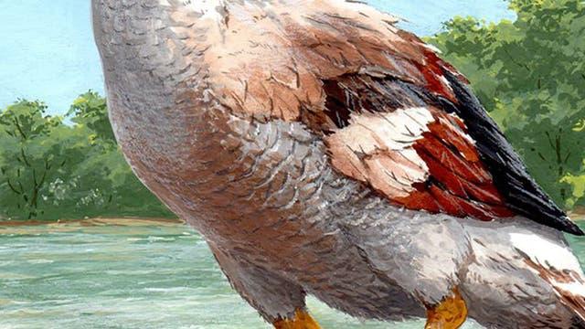 Die Riesengans Garganornis ballmanni schlug mit ihren Schwingen zu