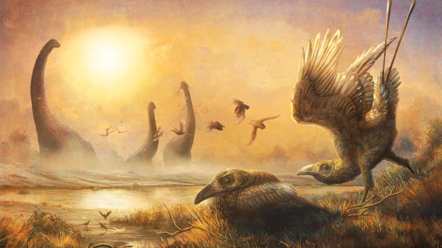 Falcatakely forsterae lebte mit Dinosauriern