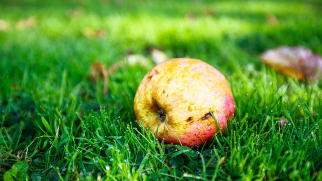 Der Apfel fiel nicht weit vom Stamm