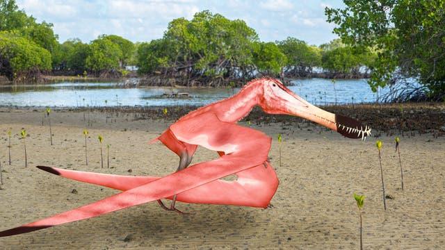 Ein rosafarbener Flugsaurier. Natürlich ist die Färbung reine Spekulation, aber Flamingos bekommen ihre Federfarbe aus der Nahrung, und einige Flugsaurier ernähren sich auf die gleiche Weise. Insofern ist das Rosa nicht komplett aus der Luft gegriffen. Auch wenn das Tier guckt, als würde es uns das übelnehmen.