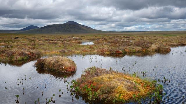 Forsinard-Flows-Naturreservat in Schottland