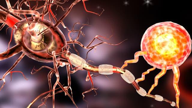 Neuron und Gliazelle