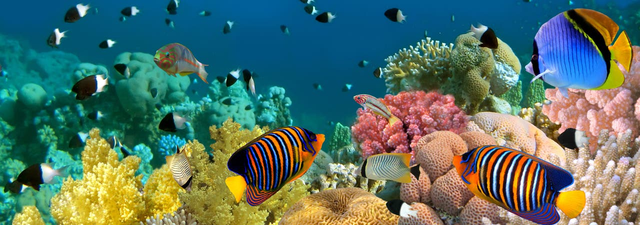 Bedrohte Ökosysteme: Die schleichende Versauerung setzt marine Lebensgemeinschaften weltweit unter Stress.