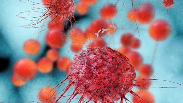 Immunzellen gegen Tumoren
